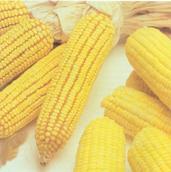 maiz-granos-vegetariano.jpg