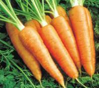 zanahorias.jpg