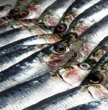 pescados-azules.jpg