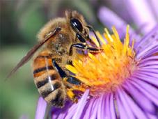 abejas miel endulzante