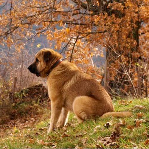 trekking perro