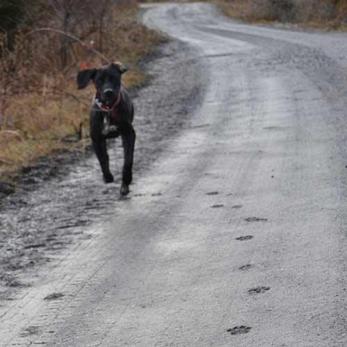 trekking perro2