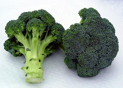 04 05 defensas brocoli