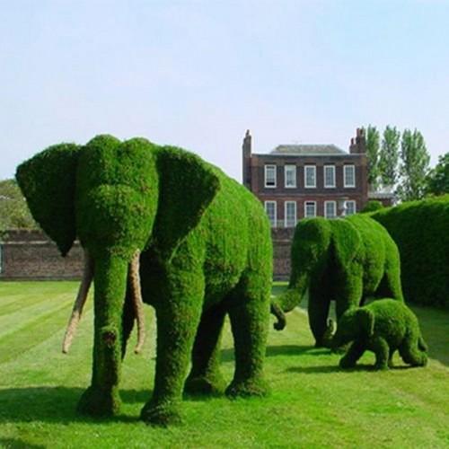 jardin-increible-plantas