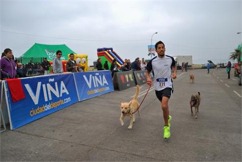consejos running perro
